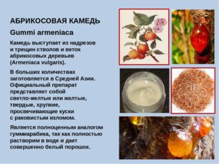 АБРИКОСОВАЯ КАМЕДЬ Gummi armeniaca Камедь выступает из надрезов и трещин ство