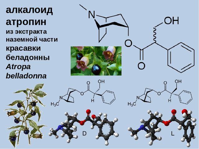 алкалоид атропин из экстракта наземной части красавки беладонны Atropa bellad...