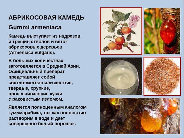 АБРИКОСОВАЯ КАМЕДЬ Gummi armeniaca Камедь выступает из надрезов и трещин ство...