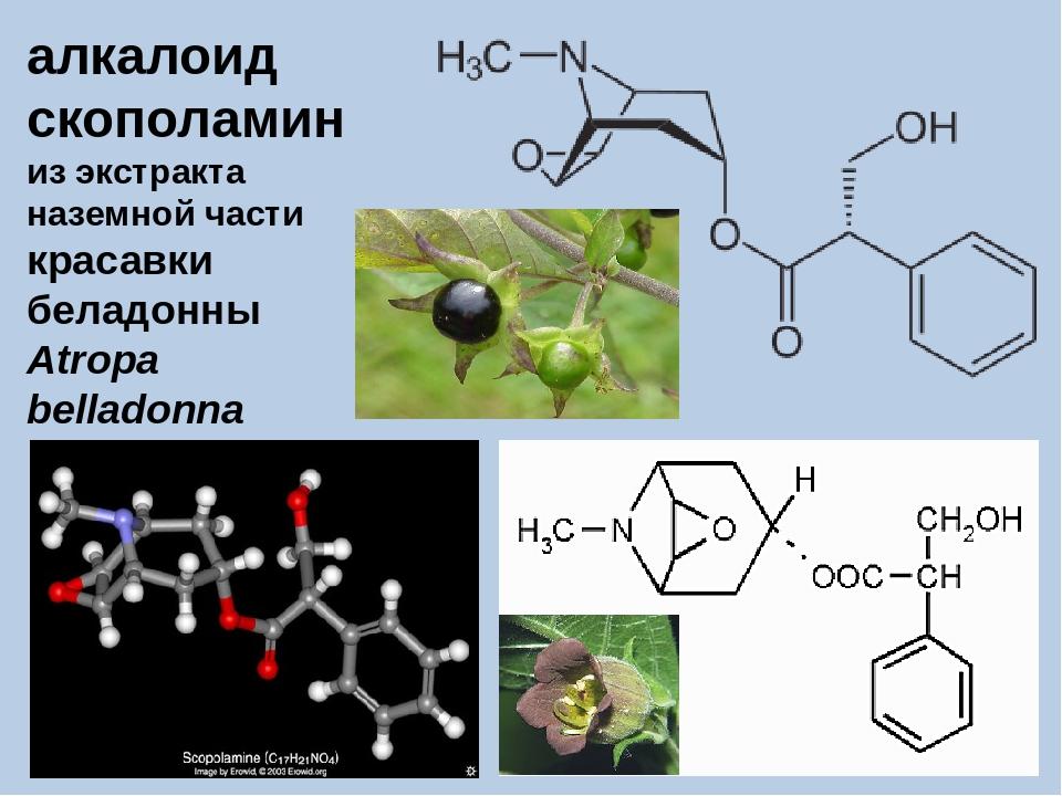 алкалоид скополамин из экстракта наземной части красавки беладонны Atropa bel...
