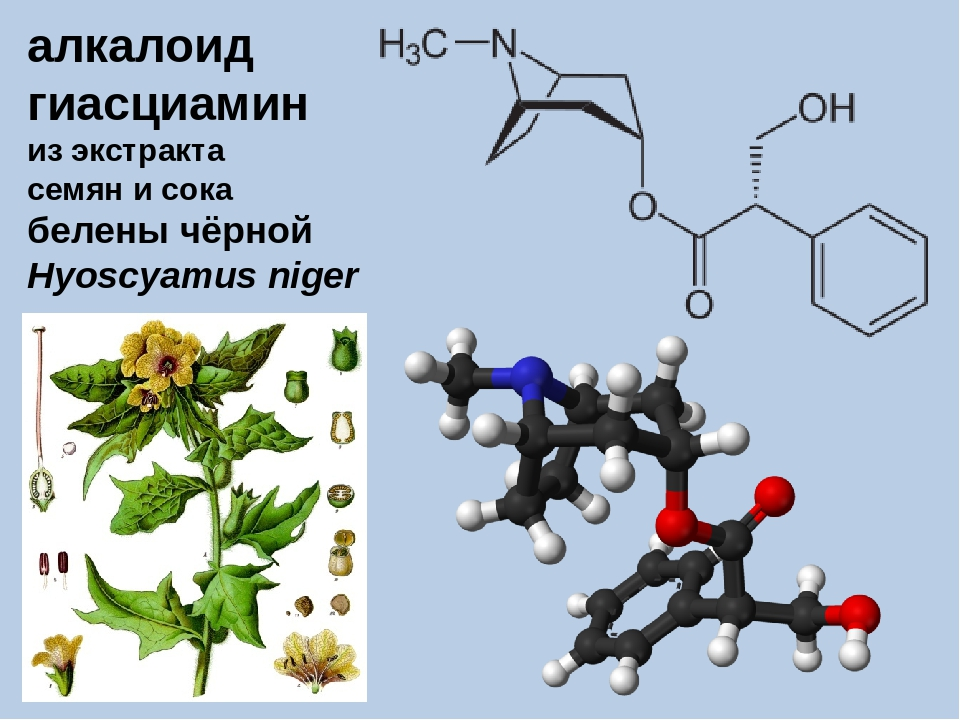 алкалоид гиасциамин из экстракта семян и сока белены чёрной Hyoscyamus niger