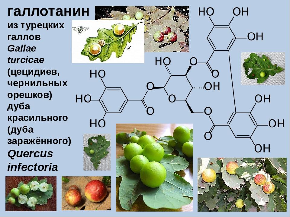 галлотанин из турецких галлов Gallae turcicae (цецидиев, чернильных орешков)...