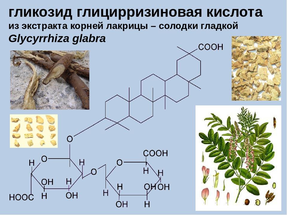 гликозид глицирризиновая кислота из экстракта корней лакрицы – солодки гладко...