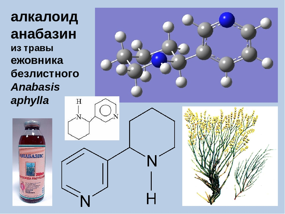 алкалоид анабазин из травы ежовника безлистного Anabasis aphylla