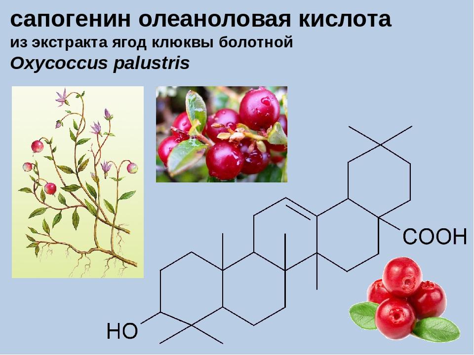 сапогенин олеаноловая кислота из экстракта ягод клюквы болотной Oxycoccus pal...