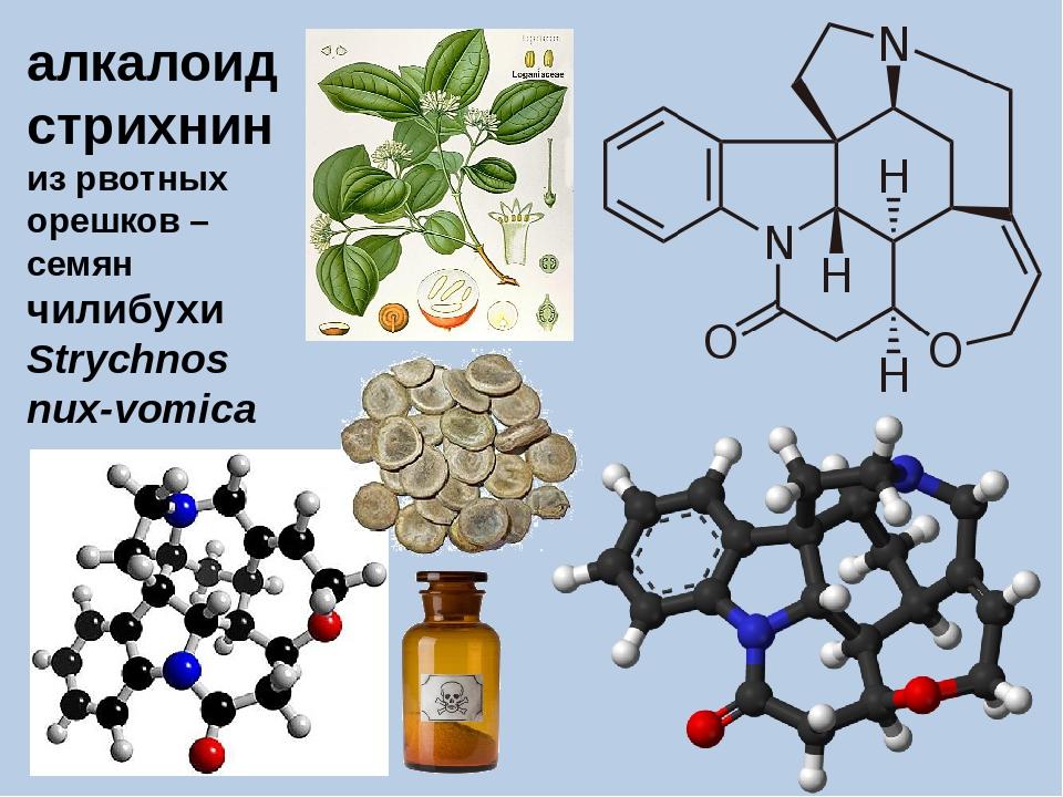 алкалоид стрихнин из рвотных орешков – семян чилибухи Strychnos nux-vomica