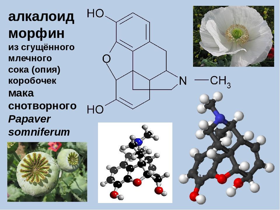 алкалоид морфин из сгущённого млечного сока (опия) коробочек мака снотворного...