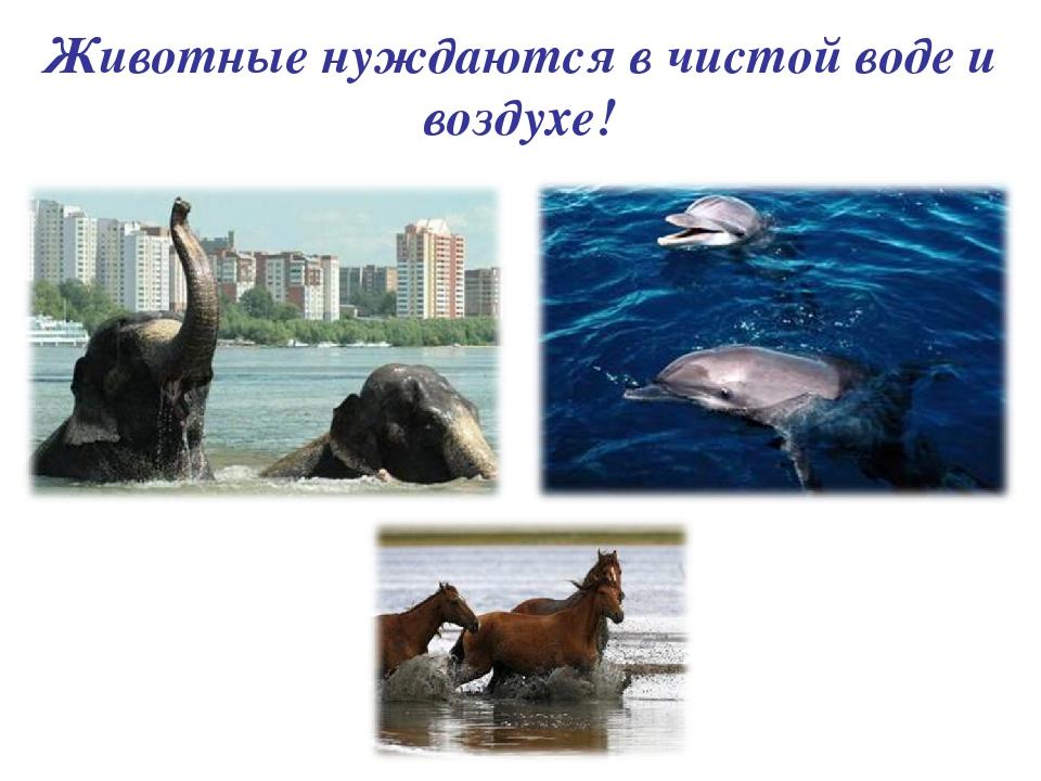 Животные нуждаются в чистой воде и воздухе!