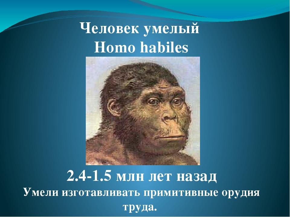 реферат на тему древние предки человека