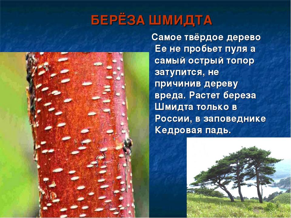 самое твердое дерево в мире