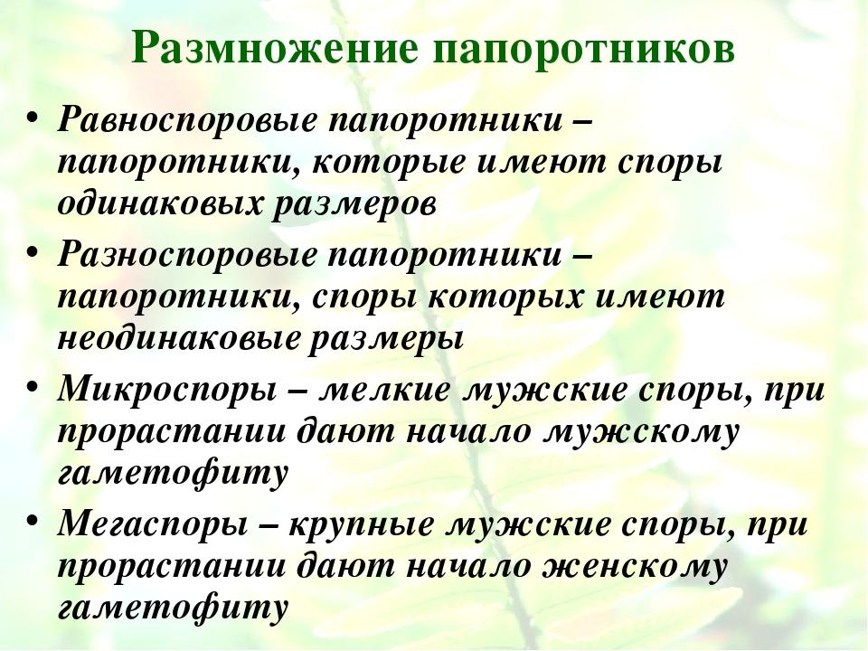 Размножение папоротников Равноспоровые папоротники – папоротники, которые име...