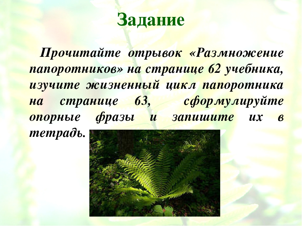 Задание Прочитайте отрывок «Размножение папоротников» на странице 62 учебника...