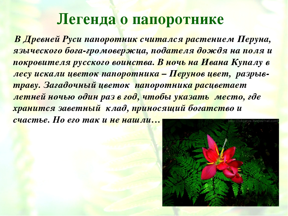 Легенда о папоротнике В Древней Руси папоротник считался растением Перуна, яз...