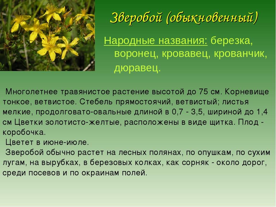 набережная как растения ставропольский край фото описание секунды