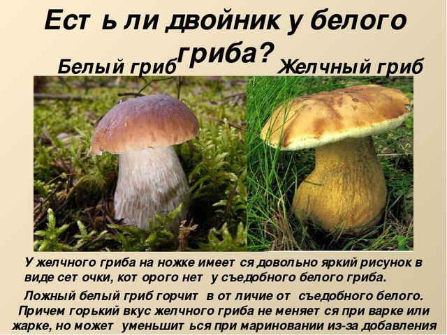 жёлчный гриб описание фото