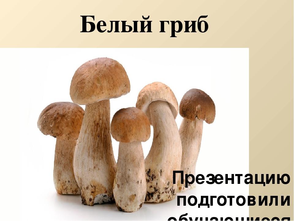 Белый гриб Презентацию подготовили обучающиеся 11 класса МБОУ СШ № 5