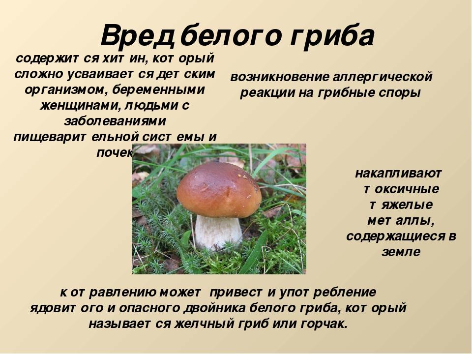Вред белого гриба содержится хитин, который сложно усваивается детским органи...