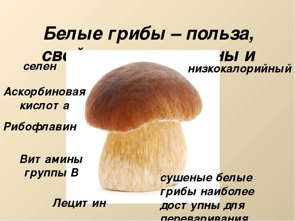 Белые грибы – польза, свойства, витамины и минералы селен Аскорбиновая кислот...