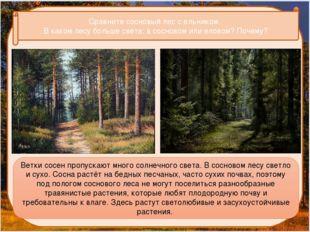 Сравните сосновый лес с ельником. В каком лесу больше света: в сосновом или
