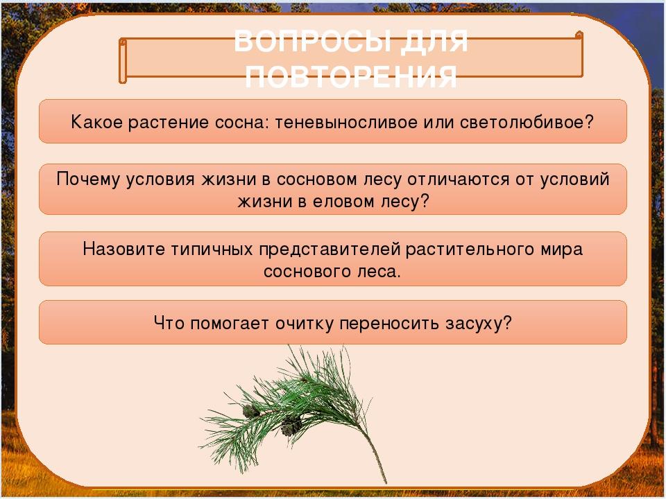 ВОПРОСЫ ДЛЯ ПОВТОРЕНИЯ Какое растение сосна: теневыносливое или светолюбивое...