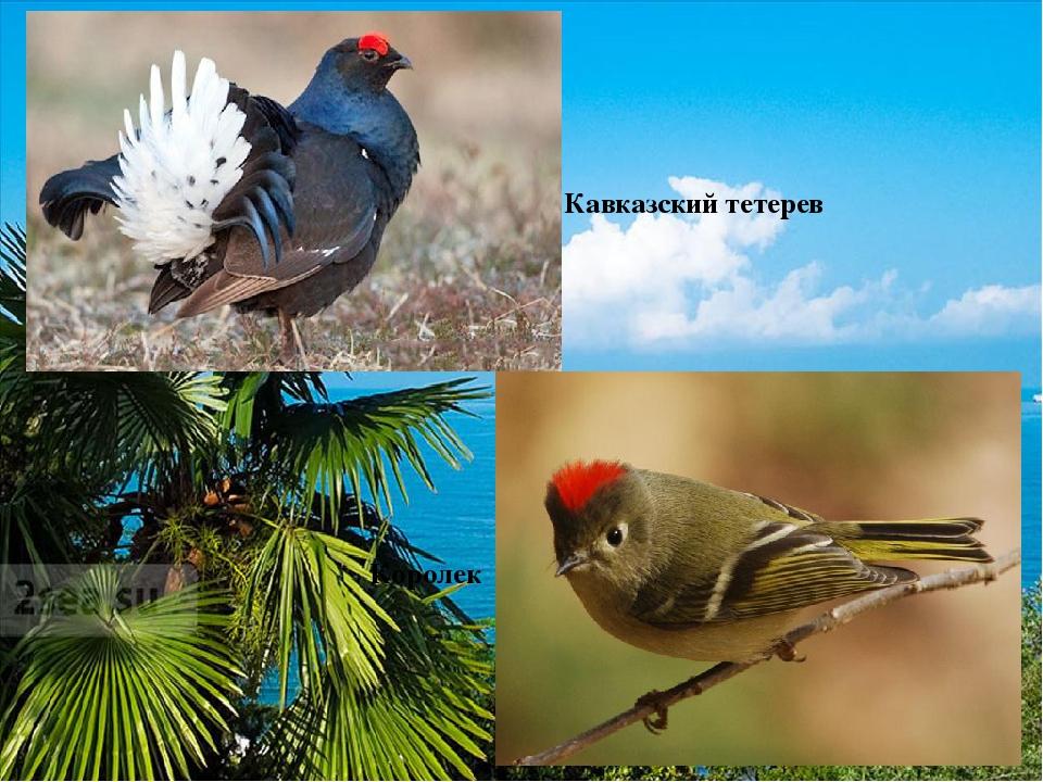 субтропики россии птицы фото тренд естественность