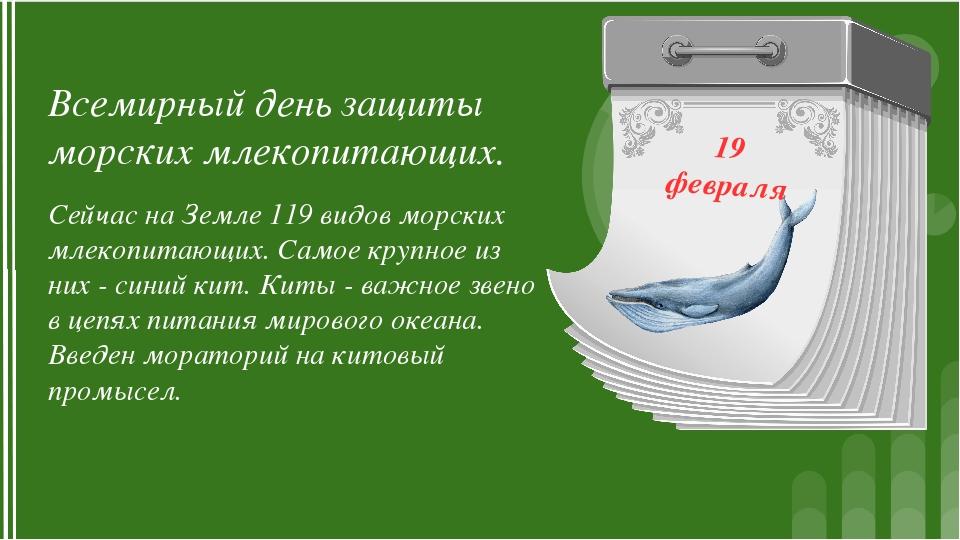 19 февраля Всемирный день защиты морских млекопитающих. Сейчас на Земле 119 в...