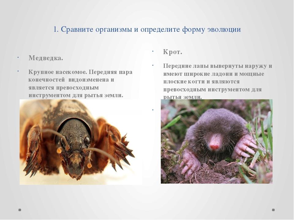 1. Сравните организмы и определите форму эволюции Медведка. Крупное насеком...