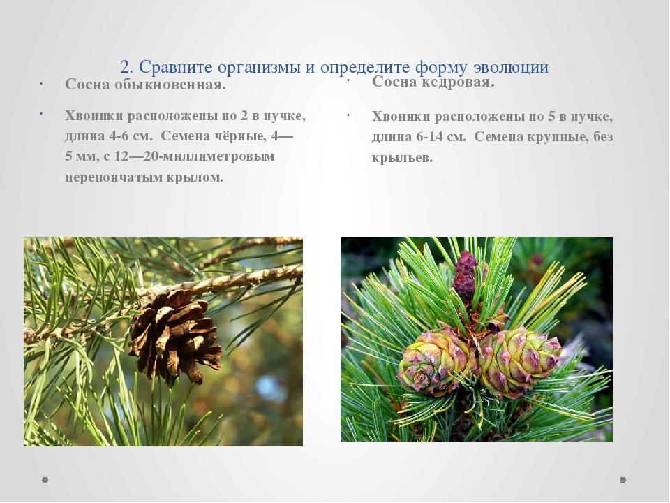 2. Сравните организмы и определите форму эволюции Сосна обыкновенная. Хвоин...