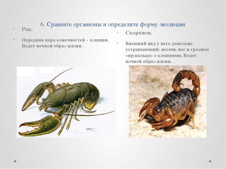 6. Сравните организмы и определите форму эволюции Рак.  Передняя пара конеч...