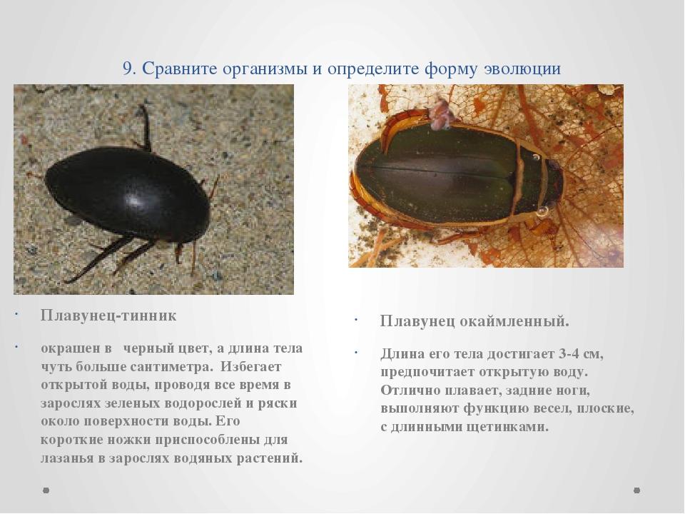 9. Сравните организмы и определите форму эволюции Плавунец-тинник  окрашен...