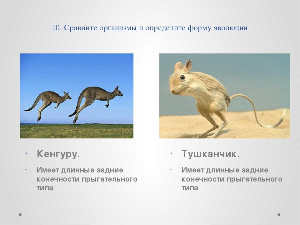 10. Сравните организмы и определите форму эволюции Кенгуру.  Имеет длинные...