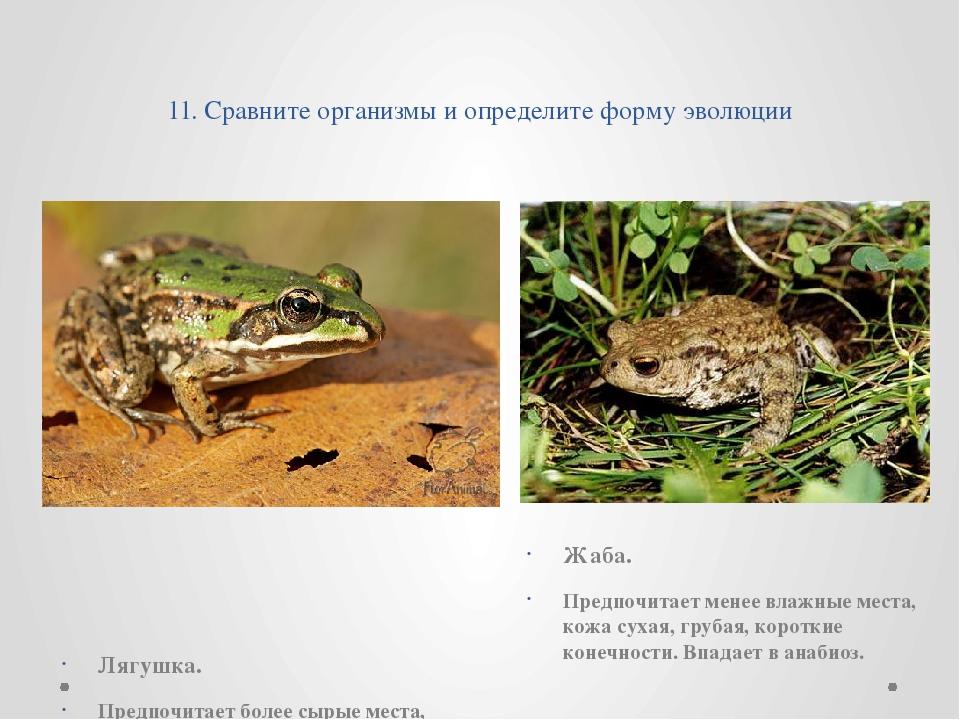 11. Сравните организмы и определите форму эволюции   Лягушка. Предпочитае...