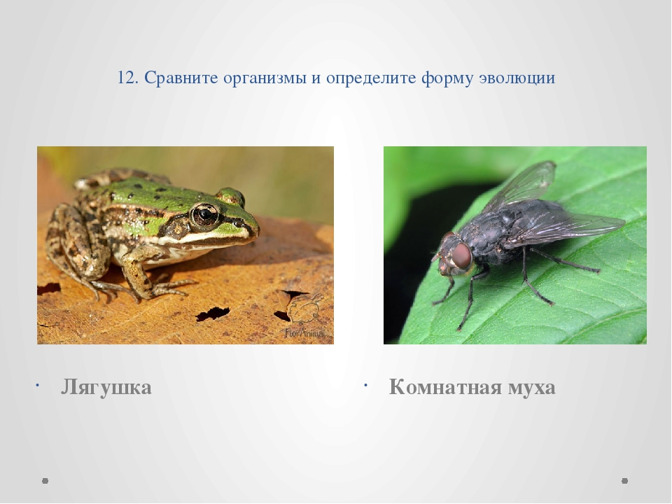 12. Сравните организмы и определите форму эволюции Лягушка