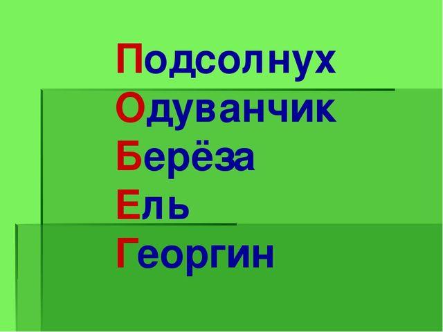 Подсолнух Одуванчик Берёза Ель Георгин