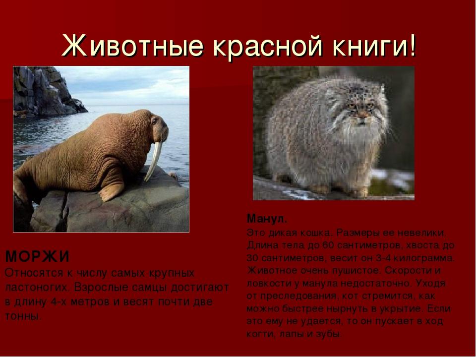 Картинки животных из красной книги с описанием, открытки 1-мая