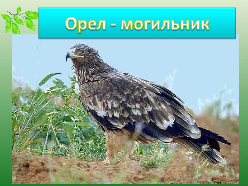 редкие птицы ставропольского края была актрисой, светской