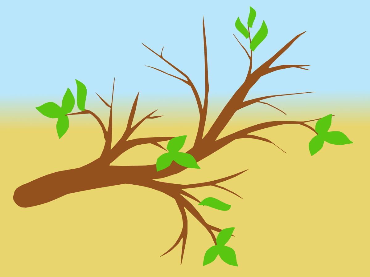 картинки с веточками деревьев считая отличного