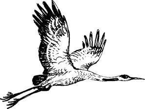 журавль летчик соколов микитов картинки примеру, берет