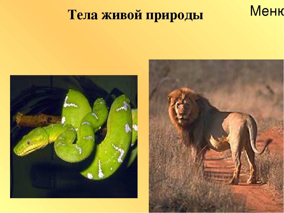Тела живой природы Меню