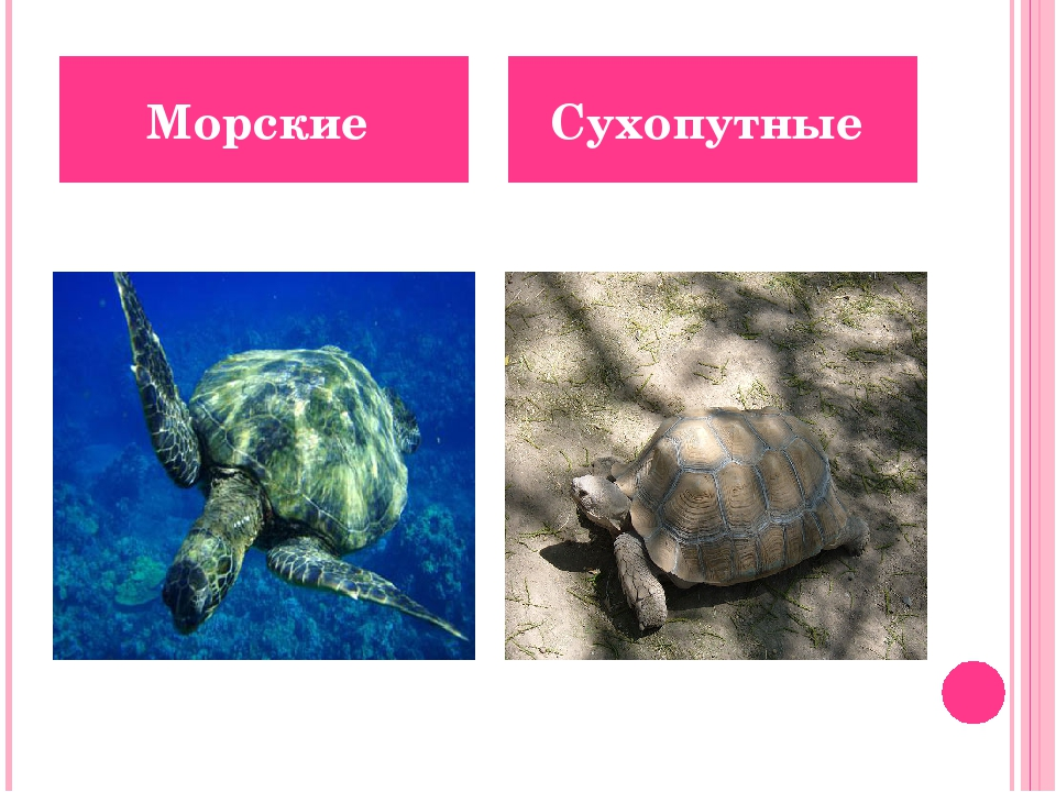 Морские Сухопутные