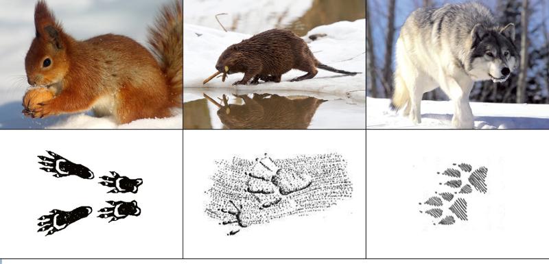 чьи следы на снегу птицы таком составе члены