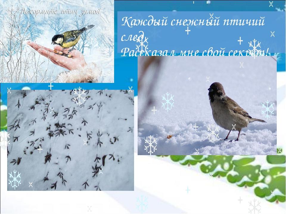 Каждый снежный птичий след Рассказал мне свой секрет!