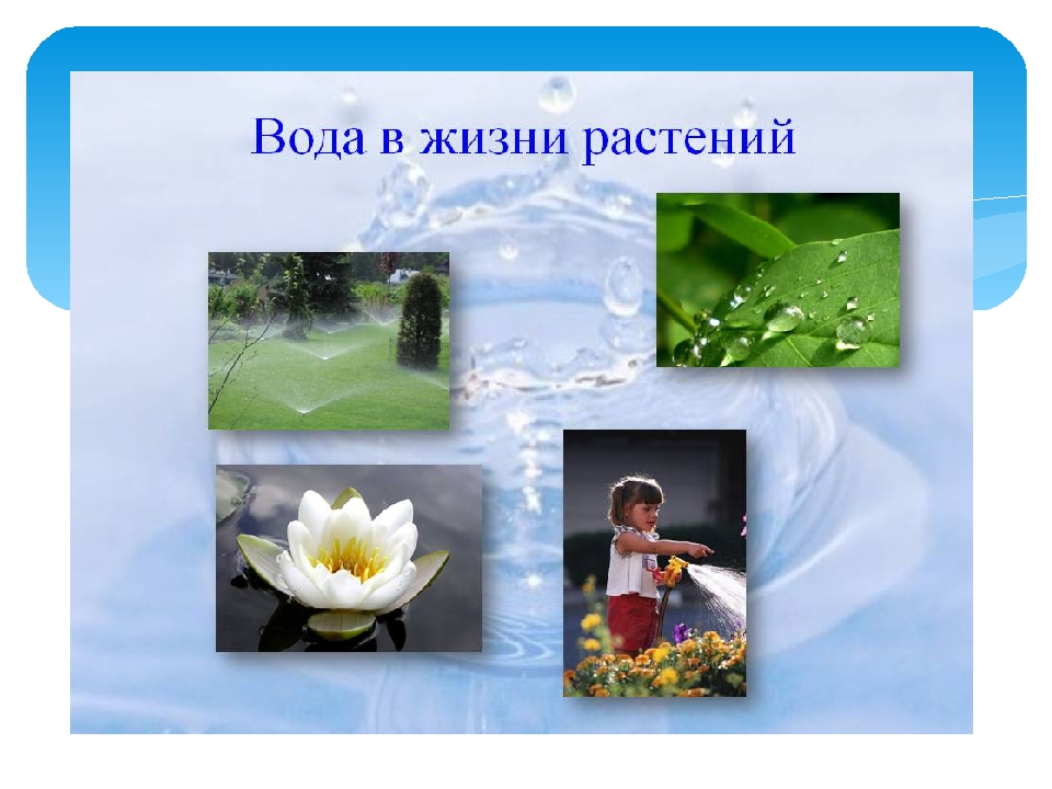 даже, растениям нужна вода в картинках знаете, почему ягоды