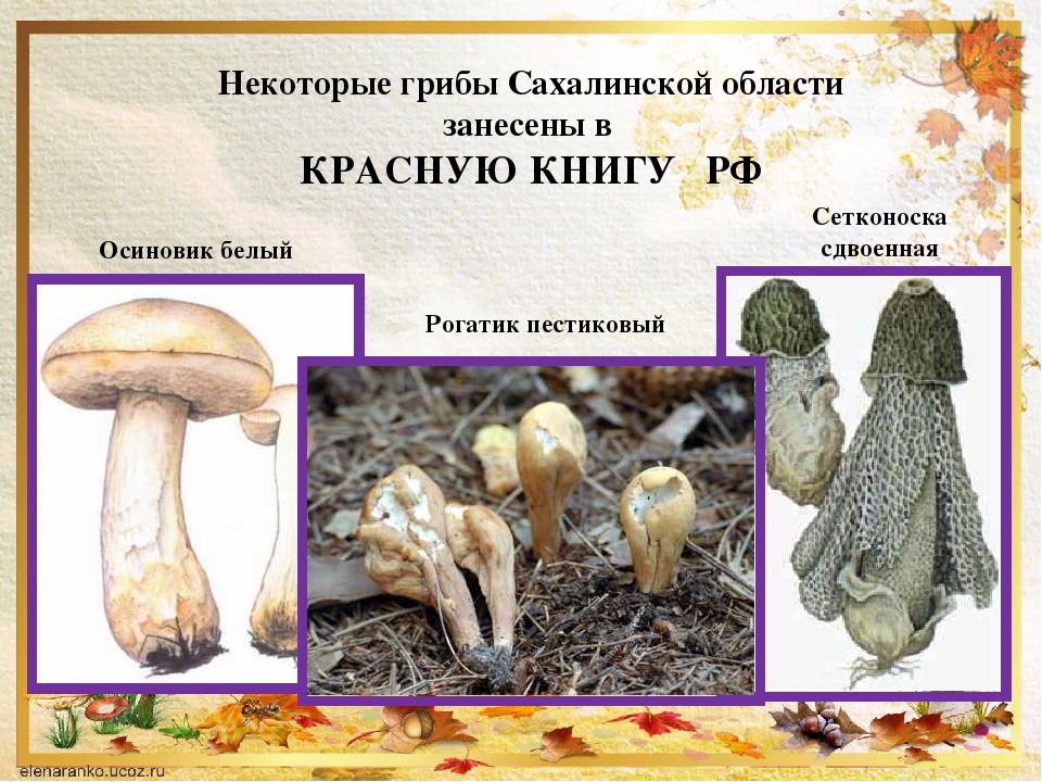Белый гриб красная книга