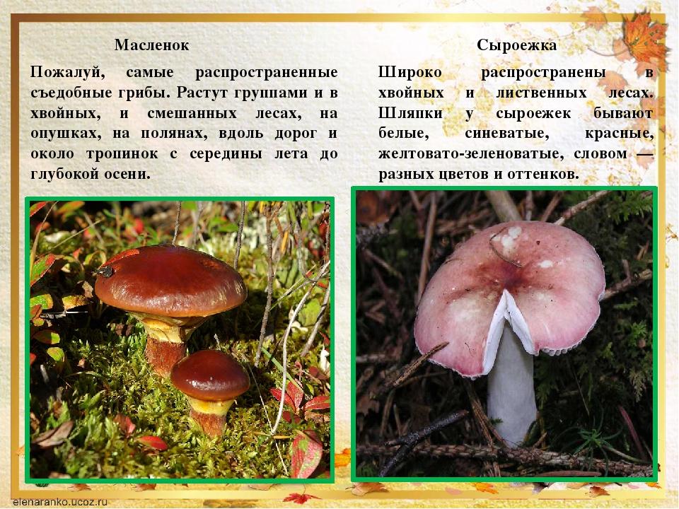 была грибы с картинками фото грибов с названиями описание информация нить немного тоньше