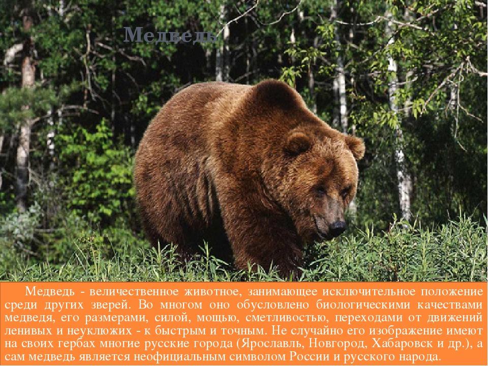животное символ россии картинки приходят, экскурсоводы опаздывают