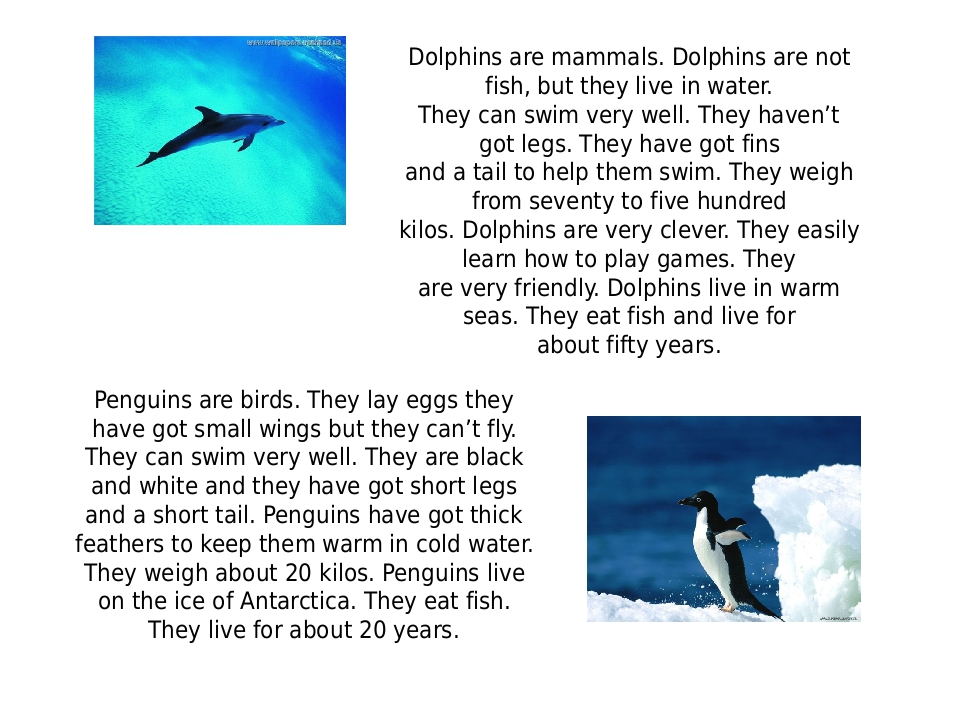Dolphins are mammals. Dolphins are not fish, but they live in water. They ca...