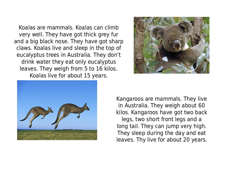 Koalas are mammals. Koalas can climb very well. They have got thick grey fur...