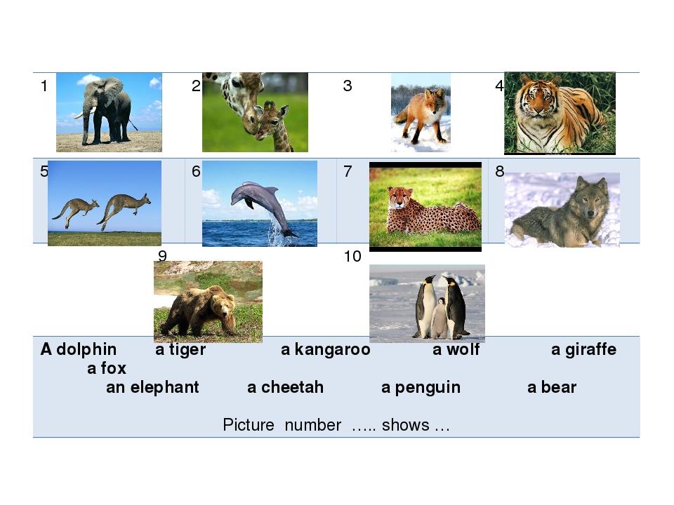 1 2 3 4 5 6 7 8 9 10 A dolphin a tiger a kangaroo a wolf a giraffea fox an el...
