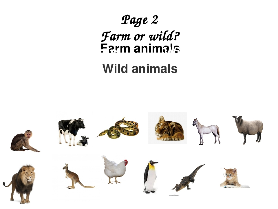 Page 2 Farm or wild? Farm animals Wild animals Farm animals Wild animals